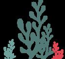 algues-apply